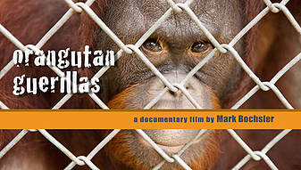 Orangutan Guerillas