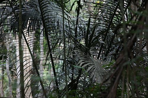 Incredible plant & animal diversity