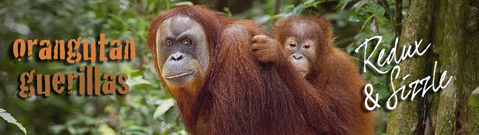 Orangutan Guerillas Trailer Redux Cover Image